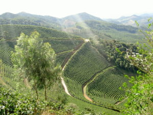 Kaffeplantage Brasilien